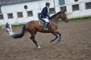 Horse_web